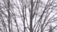 Snow falling with bare tree branches in the background video