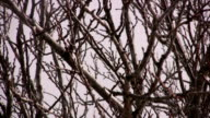 snow falls over bare winter trees video