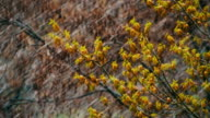 Snow goes and Snowstorm Sweeps over the Green Trees in April, the Northern Cyclone video