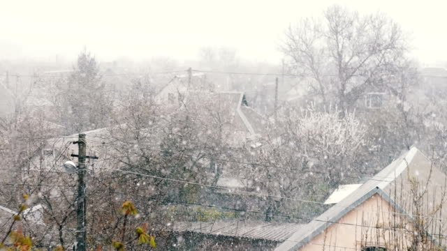 Snow in spring.Snow-covered spring street with green leaves in the trees under the snow video