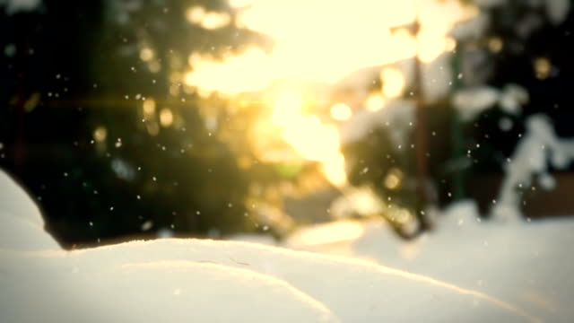 Snow in the garden loop video