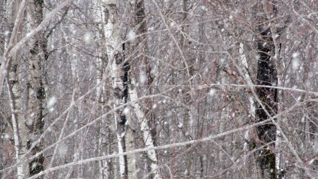 Snow in the woods video
