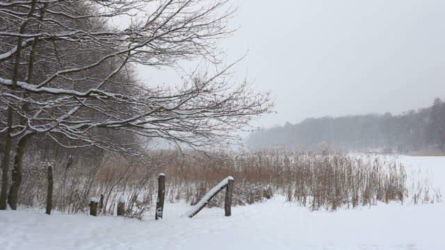Snow landscape with snowfall video
