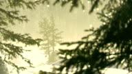Snow Melting On Trees video