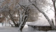 Snow on trees shed video