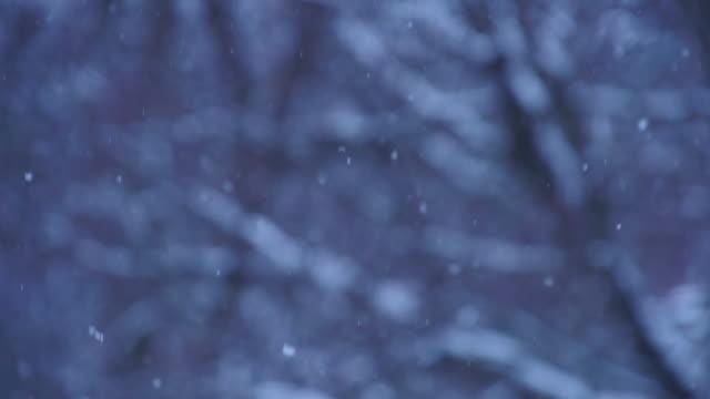 Snow softly falls at dusk video