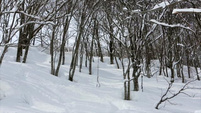 Snowboarding Powder in Japan 3 video