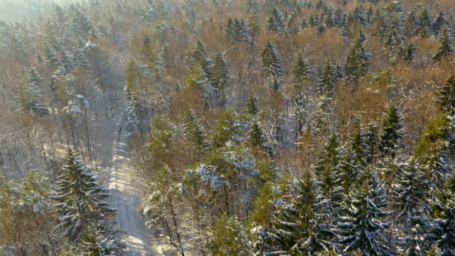 AERIAL Snowbound country road through a forest video
