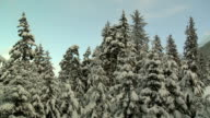 Snow-covered Pine Trees/Clouds Time Lapse HD video