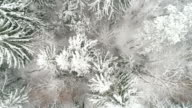 Snow-covered spruce trees in the forest of Suur-Munamagi video
