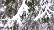 Snow-covered wood. Winter forest. video
