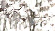snowfall - high key closeup video