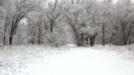 Snowfall in a winter park with snow covered trees video