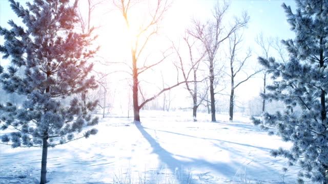 Snowfall in morning winter park slowmotion video