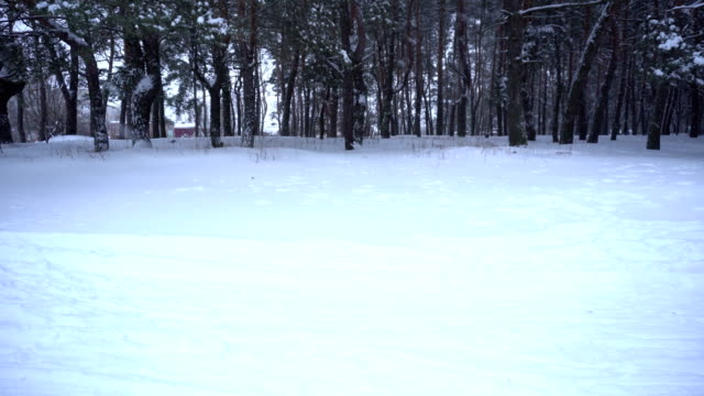 snowfall in the forest. Winter time video