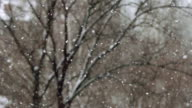 SLOW: Snowfall on a tree background in winter video