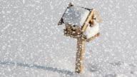 Snowfall on bird box video