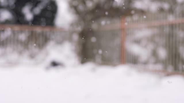 HD SUPER SLOW-MO: Snowfall video
