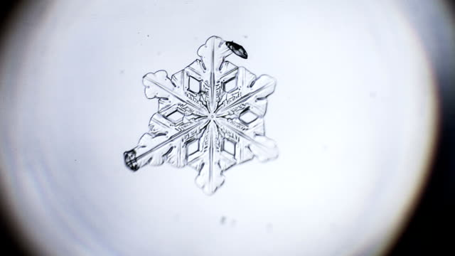 Snowflake disappear timelapse video