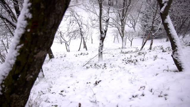 HD SUPER SLOW MO: Snowflakes Covering Forest Slope video
