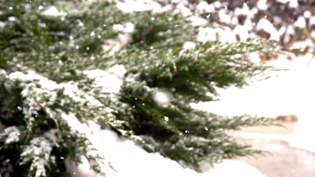 HD SUPER SLOW MO: Snowflakes Covering The Cypress video