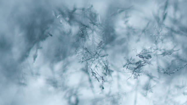 Snowflakes melt and appear video