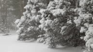 Snowing, with Trees video