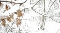 Snowy forest. Fabulous winter. video