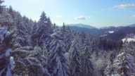 AERIAL: Snowy forest on a sunny winter day video