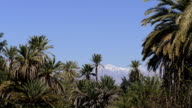 Snowy mountains, palm trees and blue sky video