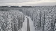 AERIAL Snowy road through winter spruce tree forest video