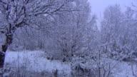 Snowy Scene video