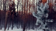 Snowy trees in city park. Winter park. Winter river. River in winter forest video