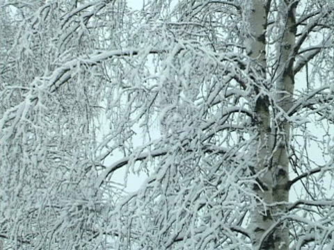 Snowy trees in winter Finland video
