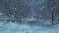 Snowy trees video