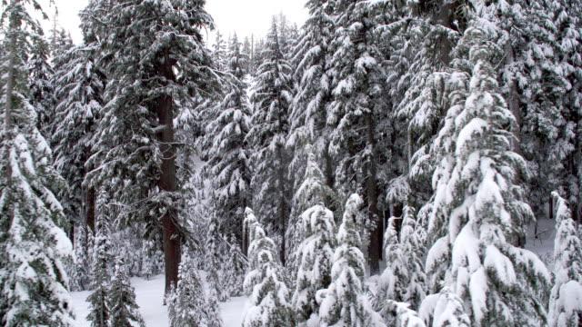 Snowy Woods video