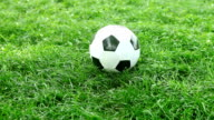 Soccer ball on the grass of football field video