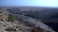 arbol socotra video