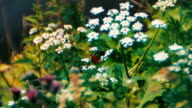Soft focus butterfly video