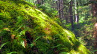 Soft Moss and Fern Plants in Nature, Macro Close Up Rain Forest video