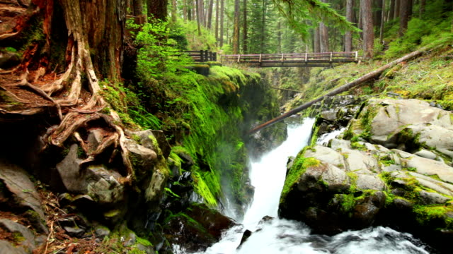 Sol Duc Falls in Olympic National Park, Washington, USA video