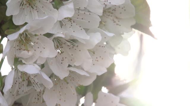 Solar Bloom video