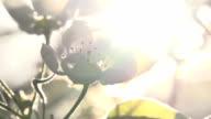 Solar Flower video