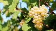 solar grape video