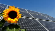 Solar Panel /sunflower in the wind video