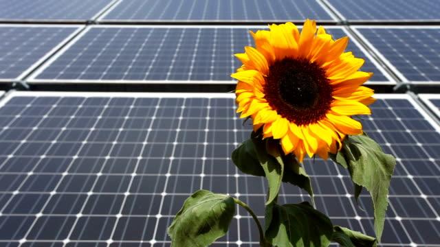 Solar Panels wit sunflower video