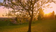 Solitary tree in the meadow at sunset video