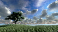 Solitary tree on green meadow, timelapse clouds video