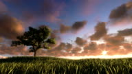 Solitary tree on green meadow, timelapse sunrise, night to day video