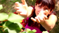 Somebody in branches of a tree picking plums and throwing them to a woman video